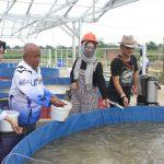 Komunitas Bisnis Berbasis Syariah Indonesia (KB2SI) Sumatera Selatan, mengembangkan Budidaya Lele secara syariah.